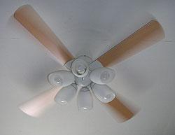 20060701_fan.jpg